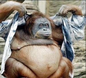 fat ape